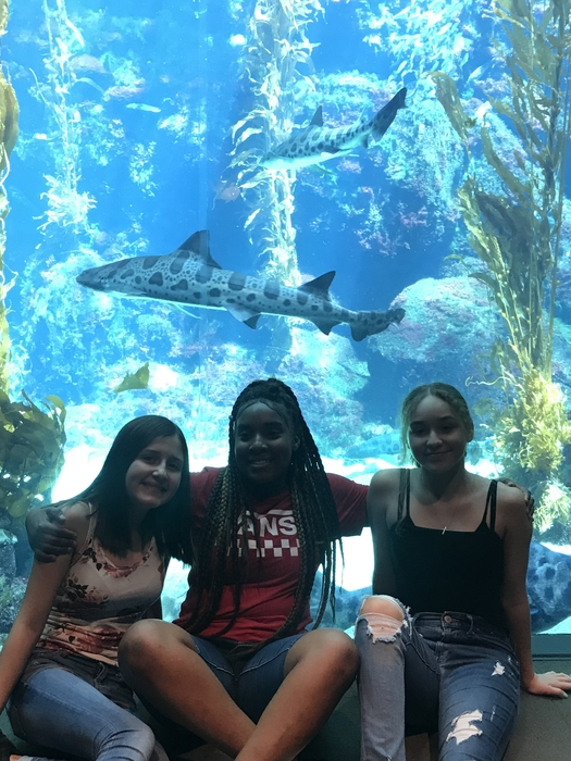 With Tiger Sharks